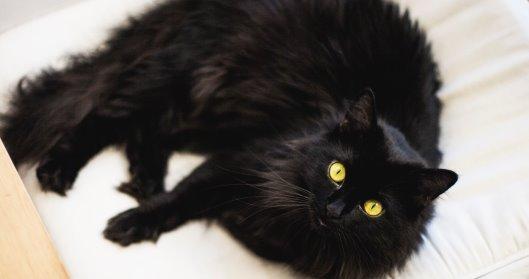 Samo crni mačak