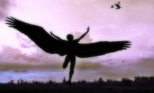 krila slobode