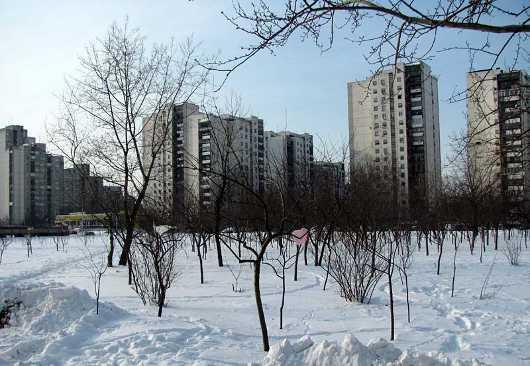 vocnjak sneg