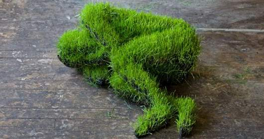 life of grass